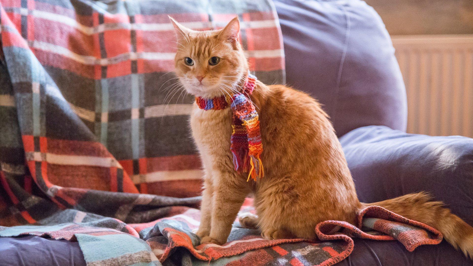 Regarder A Street Cat Named Bob en streaming gratuit