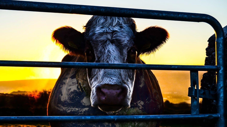 Regarder Cowspiracy: Le Secret de la durabilité en streaming gratuit