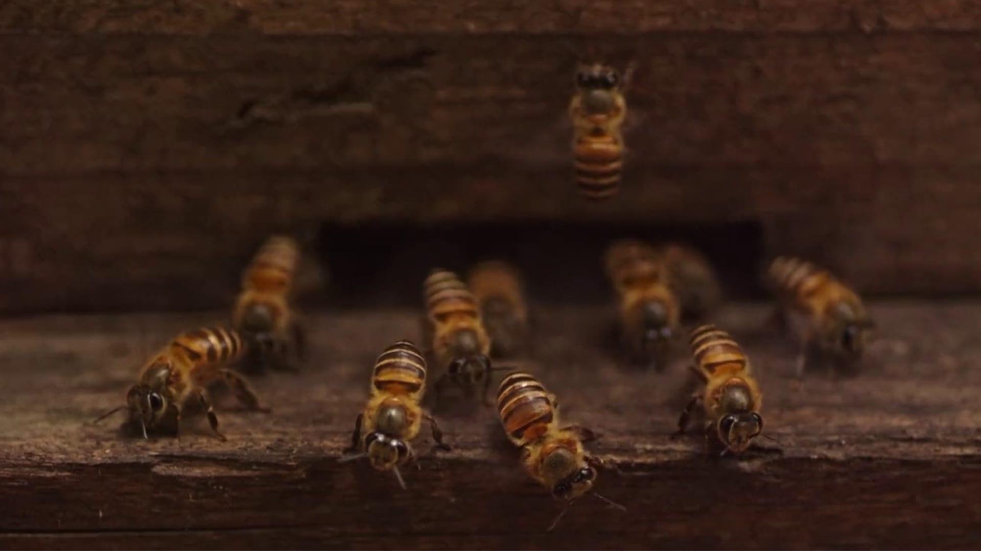 Regarder Plan Bee en streaming gratuit