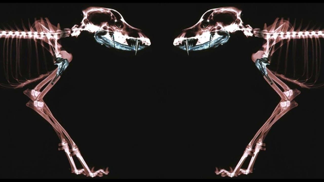 Regarder Rottweiler en streaming gratuit