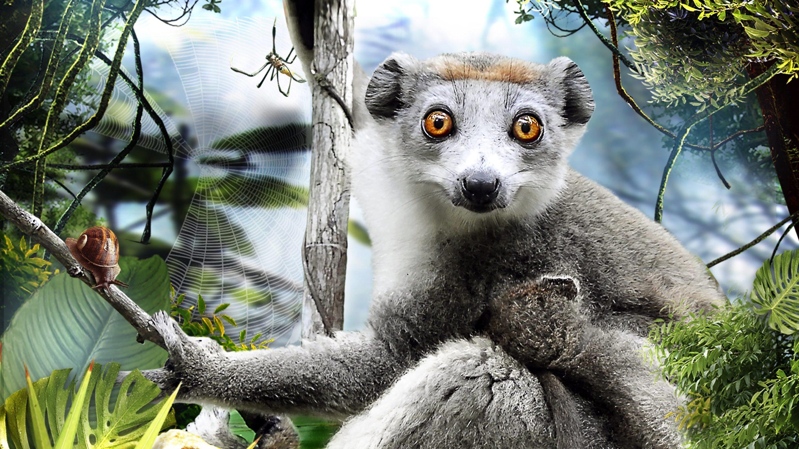 Regarder Madagascar 3D en streaming gratuit